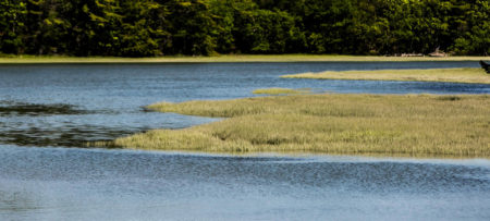Wind rippled water surrounded by golden grasses and green trees
